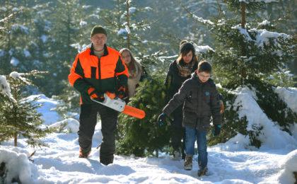 Weihnachtsbaum selbst schlagen mit der ganzen Familie
