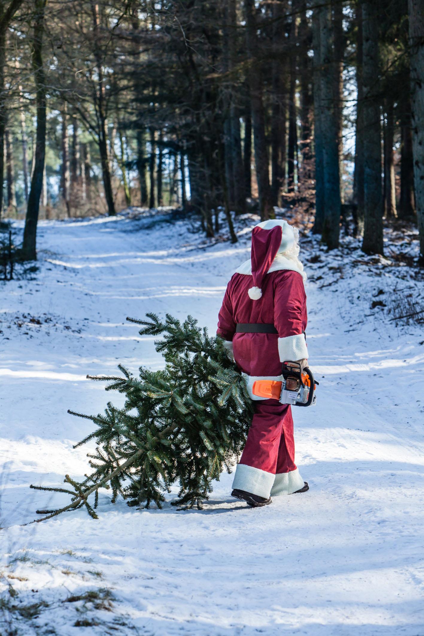 Weihnachtsbaum selbst schlagen mit dem Weihnachtsmann